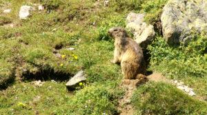Chalet le GrillLes marmottes de la Muzelle vous attendent.